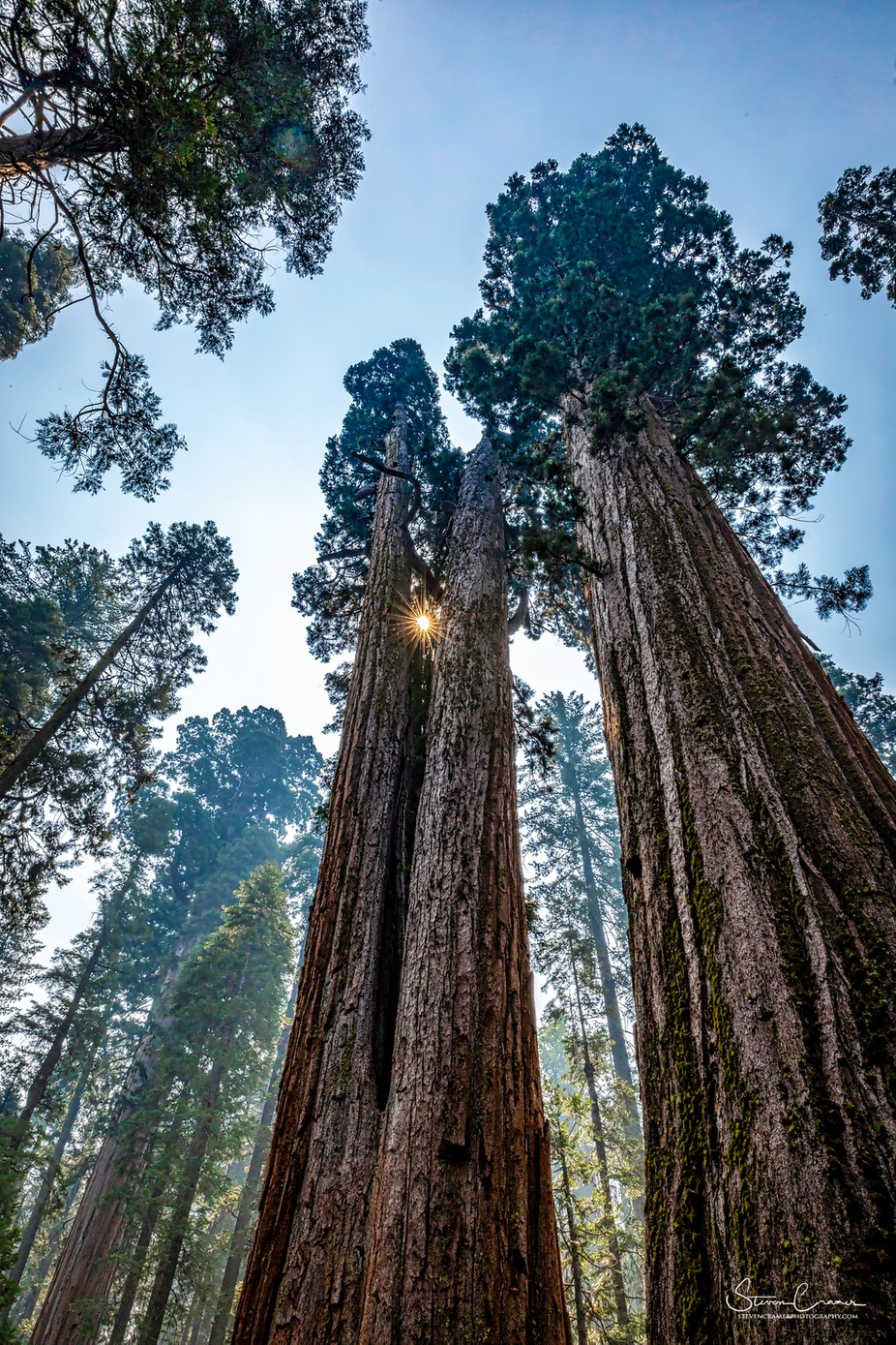 5D081018BigTrees.F by Follow_thelight - Image Of The Month Photo Contest Vol 37