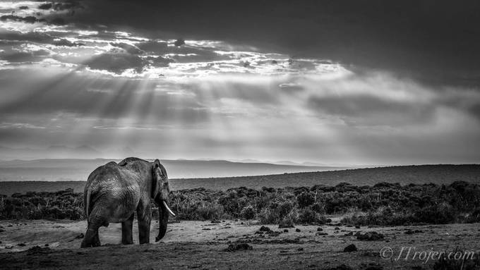 In to the wild by Jtrojer - Image Of The Month Photo Contest Vol 37