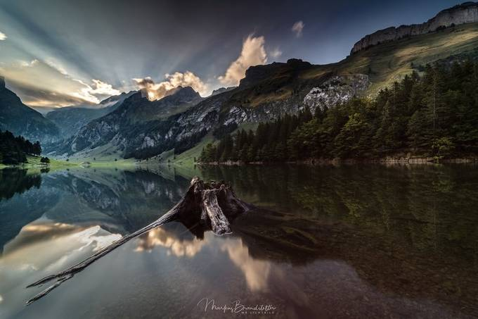 Roots by mb_lichtbild - Monthly Pro Photo Contest Vol 45