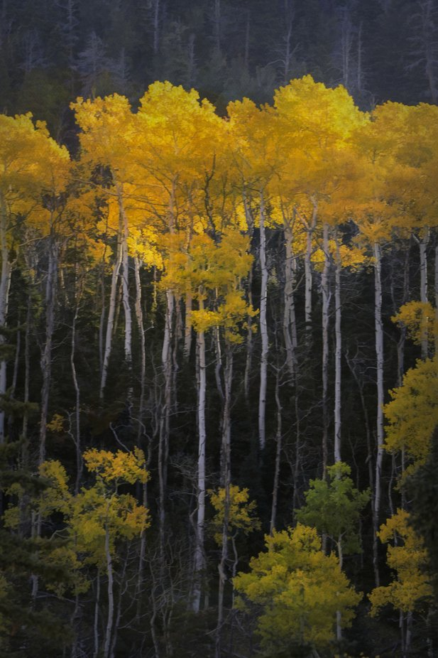 Sunburnt Canopy by GayleLucci - Image Of The Month Photo Contest Vol 37