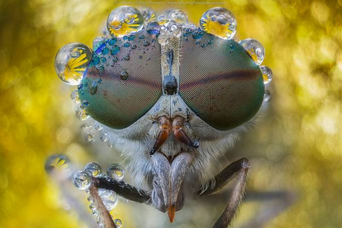 I wet my glasses againg by albertoghizzipanizza - Image Of The Month Photo Contest Vol 37