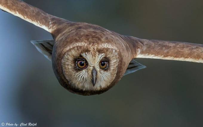 Owl Eyes by ClintRalphPhotography - Image Of The Month Photo Contest Vol 37