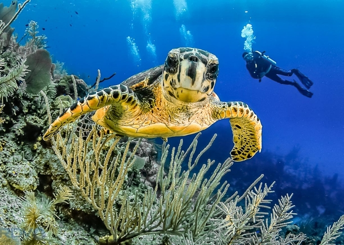 Curious Turtle by RDVPhotography - Monthly Pro Photo Contest Vol 45