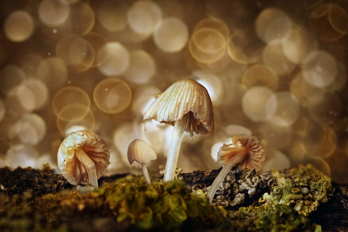Mushrooms by Rommerus - Monthly Pro Photo Contest Vol 45