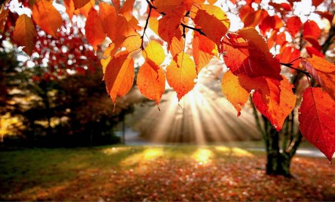 Autumn. Sad to see such beautiful colours go... by imagesbynatalie - Covers Photo Contest Vol 51