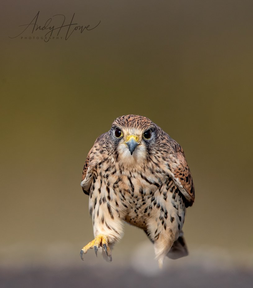 BN2I0452 by AndyHowePhotography - Shallow Depth Photo Contest