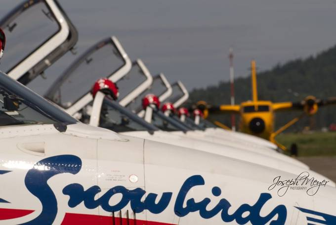 Snowbirds 11 by tigercat - Shallow Depth Photo Contest