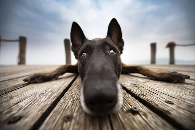 Sweetest dog ever by ClaudioPiccoli - Shallow Depth Photo Contest