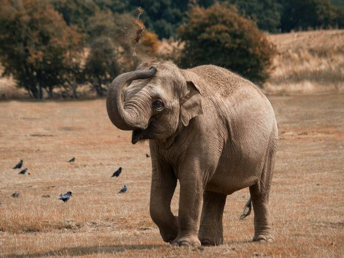 Elephant applies sunscreen by Geoff-M - My Best New Shot Photo Contest