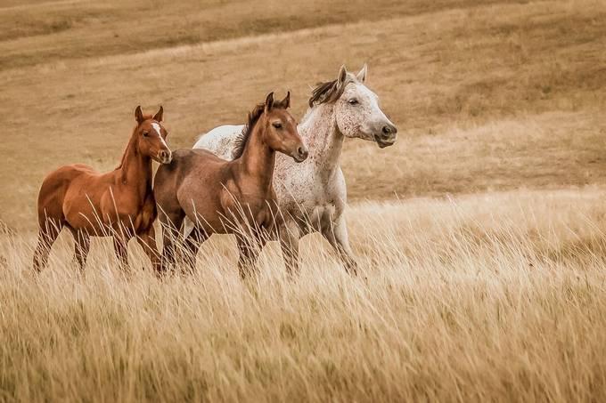 Trio by EvaBareis - My Best New Shot Photo Contest