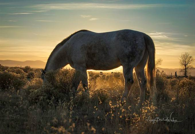 colorado sun by pansybrandtwinters - My Best New Shot Photo Contest