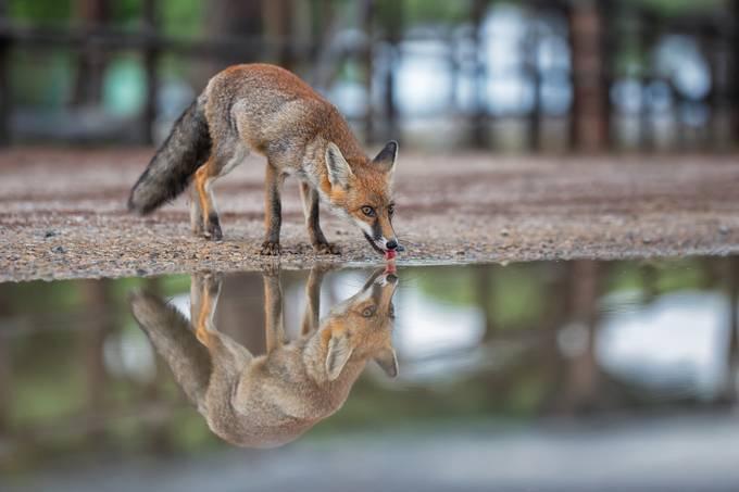 Water Break by HenrikSpranz - My Best New Shot Photo Contest