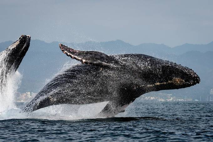 Double Breach by CapturedImages - My Best New Shot Photo Contest