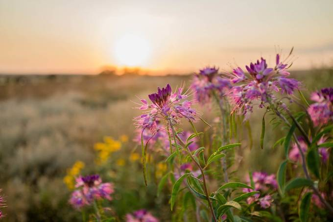 Prairie Treasures by lauragardner - Shallow Depth Photo Contest