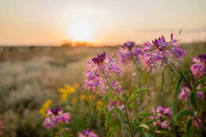 Prairie Treasures by lauragardner - Shallow Depth Photo Contest