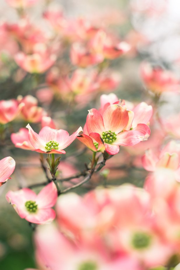 Blossoming Plant by kenproshot - Shallow Depth Photo Contest