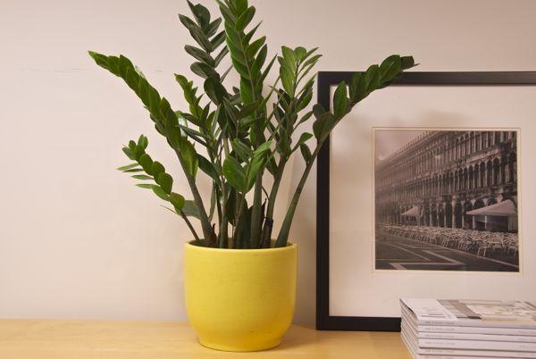 plant-01