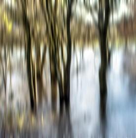 Trees, Ice and Flood - Stephen Cooper