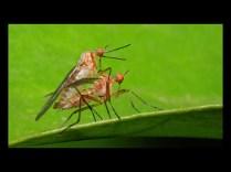 Tony Fagan_ - Mating Dance Flies (Nature - PDI, Gold)