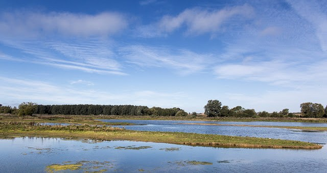 Manor Farm - Floodplain Forest Nature Reserve