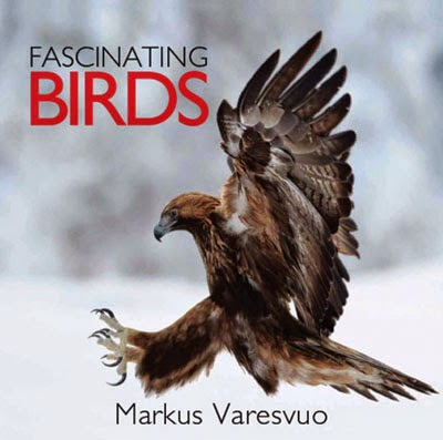 Fascinating Birds - Review