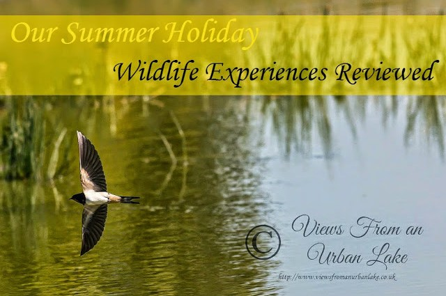 Our Summer Holiday Wildlife Experiences Reviewed