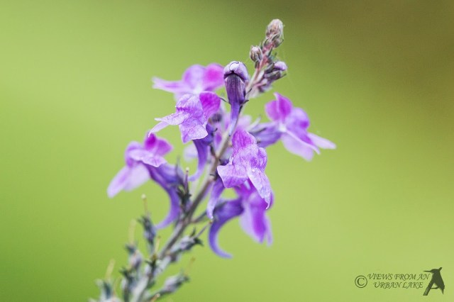 Purple Flower Colour in Autumn