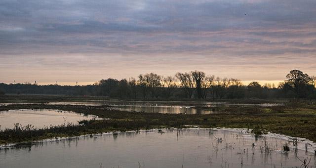 Sunrise at the floodplain Forest