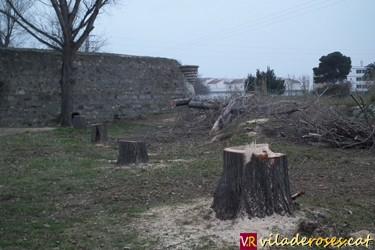 tala_arbres_ciutadella