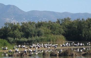 25è Festival de les aus al Parc Natural dels Aiguamolls de l'Empordà