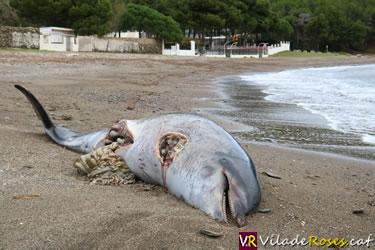 Dofí mort a Cala Montjoi