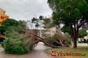 Inundacions a Santa Margarida, a la C-260 i arbres caiguts són les principals conseqüències del temporal Glòria al seu pas per Roses