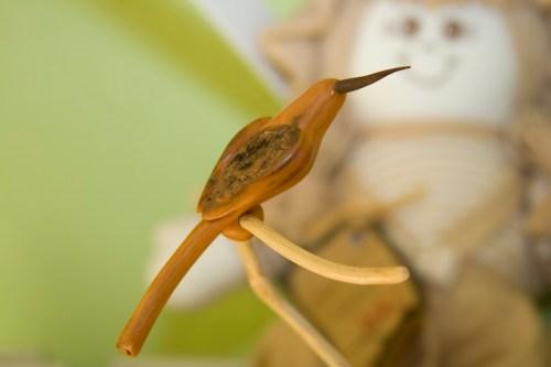 Beija-flor esculpido pelo Nito na casca do Cajá