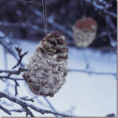 Pinhas cheias com comida para pássaros