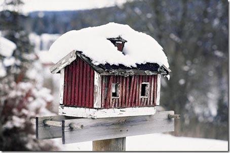 Casa de passarinho é um abrigo nos tempos de inverno