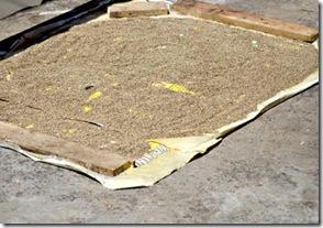 Grãos secando ao sol em pleno mercado público