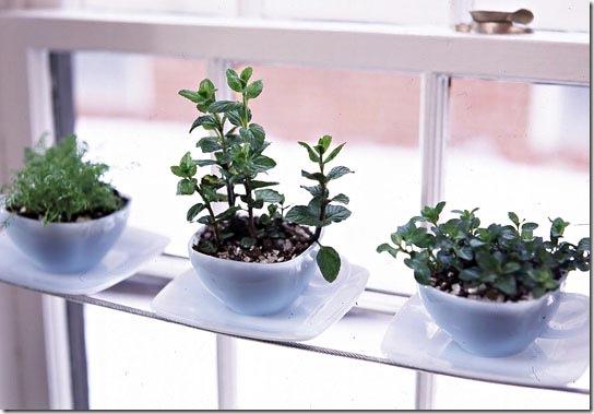 Mini-hortas plantadas em xícaras no parapeito da janela