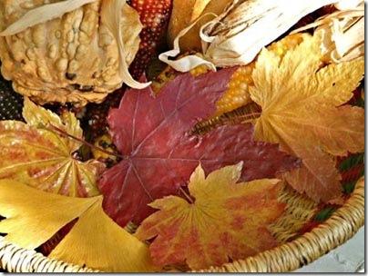 Como manter o colorido das folhas desidratadas