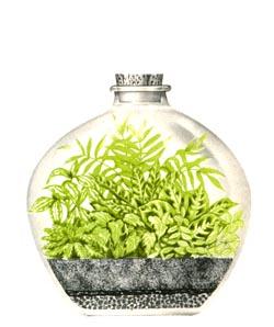 Feche o terrário e espere as plantas crescerem