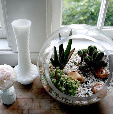 Terrário jardim em vidro aberto na lateral