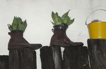 As botas velhas que viraram vasos