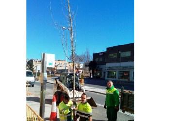 arbres carrer Montserrat (1) web V02