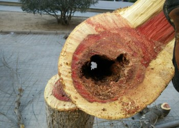 tala arbres fco guisado (2)