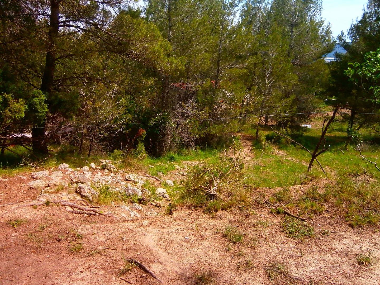 Cordes al bosc vilanovi maig 2016 1