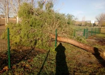 actuacio-arbres-tempesta-foto-luis-perea-11