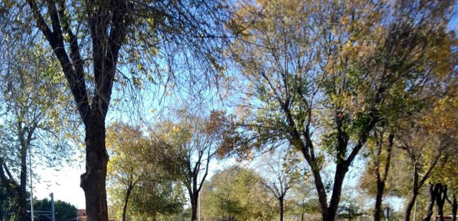 arbres-recurs