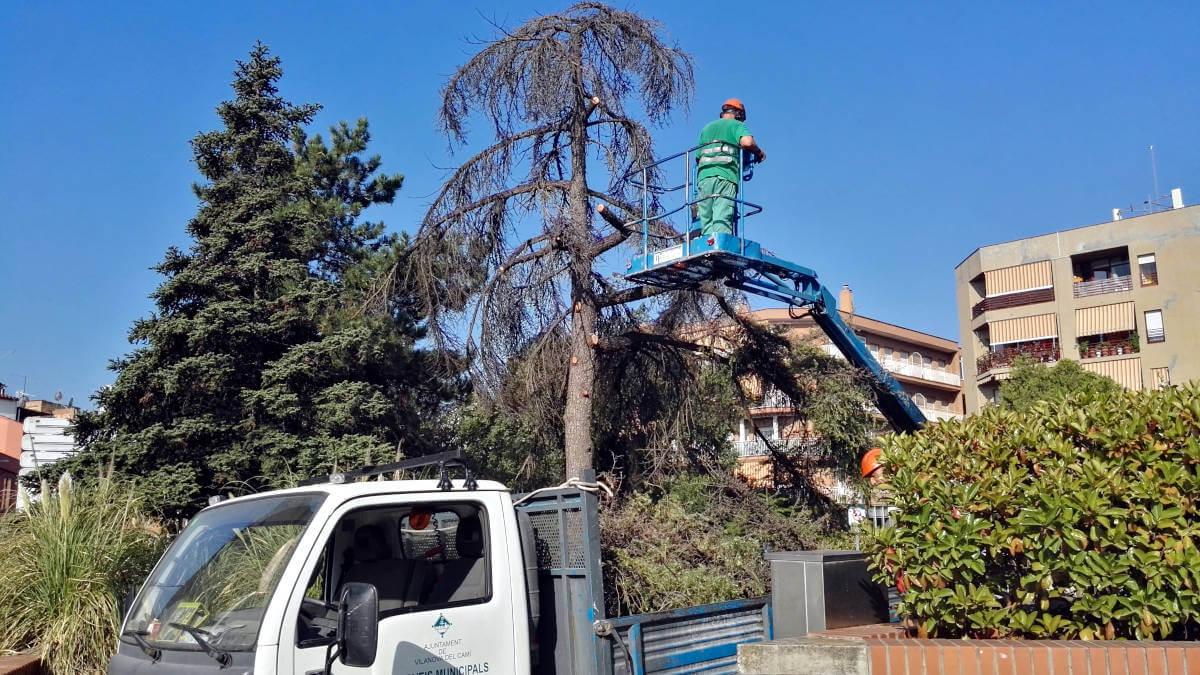 tala arbre placa Vilarrubias (7)