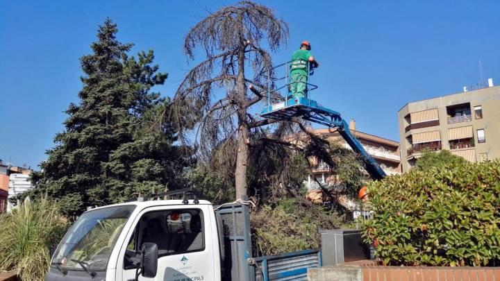 tala arbre placa Vilarrubias agost 19