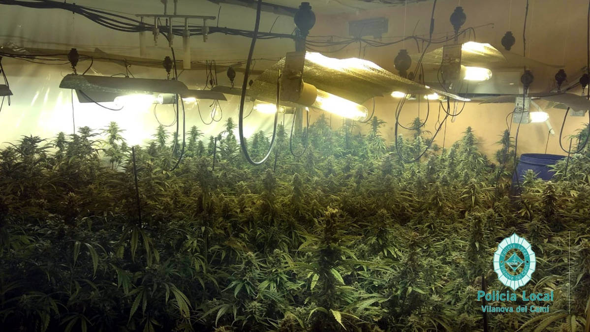Plantacio marihuana a Vilanova 2