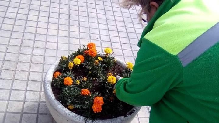 Treballs jardineria